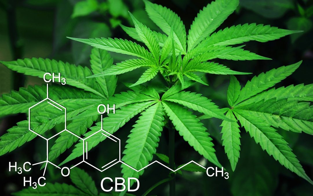 What Is CBD – The Guide.